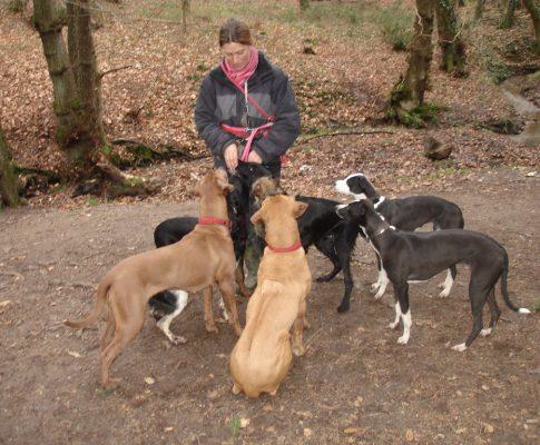 Find den perfekte hundelufter