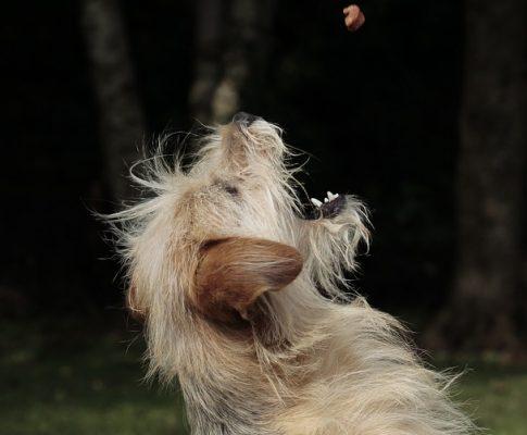 Tips til billigt og næringsrigt hundefoder