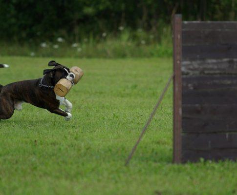 Få en velopdragen hund med hundetræning