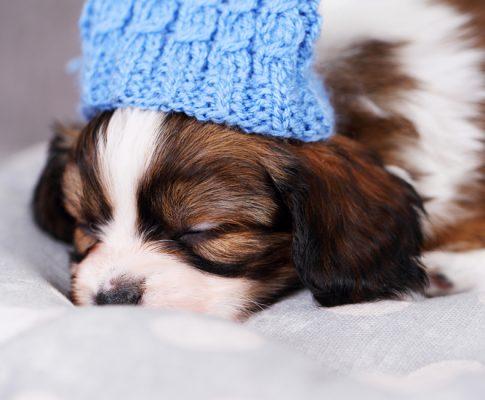 Køb hundepude og andet tilbehør på nettet
