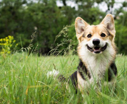Adopt, don't shop: Gode råd til dig, der gerne vil adoptere en hund